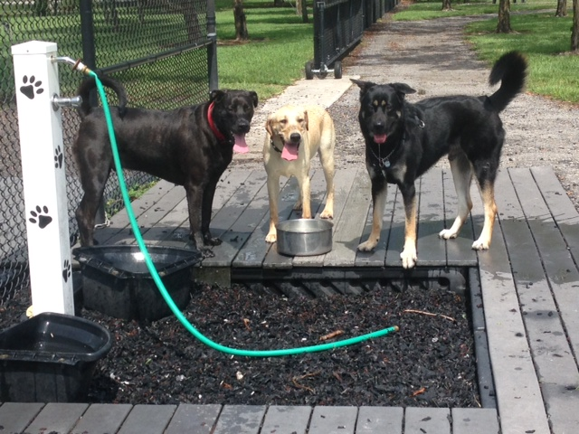 Copywriting service dog