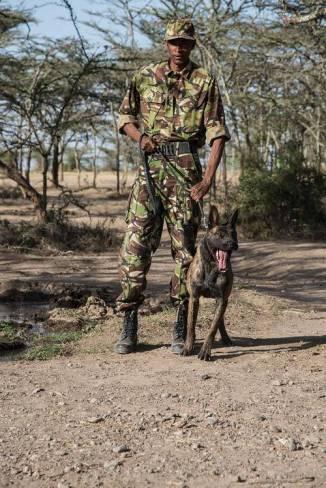 ff66_dogswaronpoachers02__large