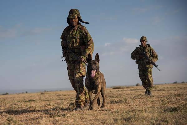 ff66_dogswaronpoachers03__large