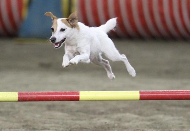 2010 cyno jrt jump action-1