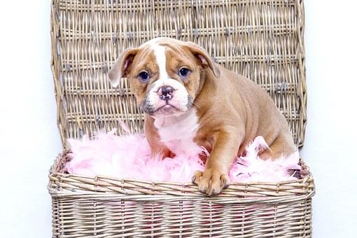 puppy-1118582__340.jpg
