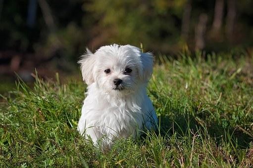 dog-1123016__340.jpg