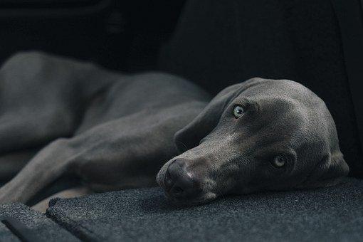dog-1031058__340